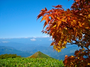 Japanese Maples turning red, Mountains beyond
